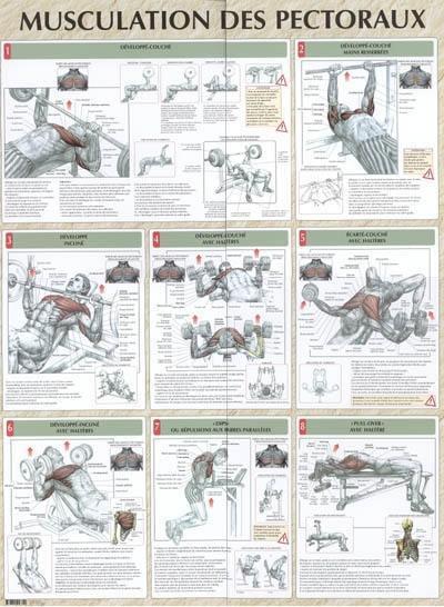 Livre : Musculation des pectoraux écrit par Frédéric